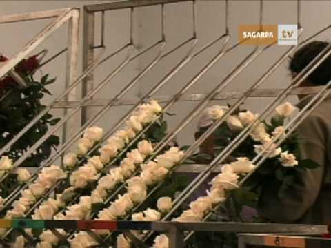 B201 aumento producci n de plantas y flores de ornato for Produccion de plantas ornamentales pdf