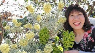 Giống hoa lạ khoe sắc cùng ngàn hoa ở Mỹ