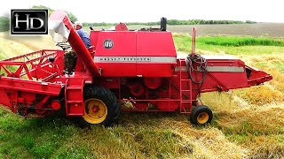 УБОРКА пшеницы ☆ MASEEY-FERGUSON 186 (58 л.с.)