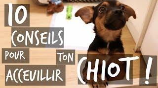 10 CONSEILS POUR TON CHIOT !! - TOOPET