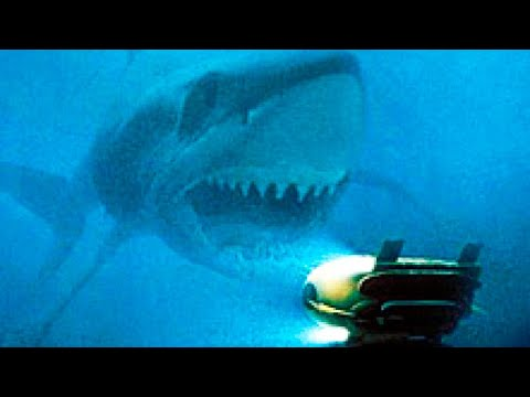 Do Monster Megalodons Still Lurk In Our Waters? | Lifehacker Australia