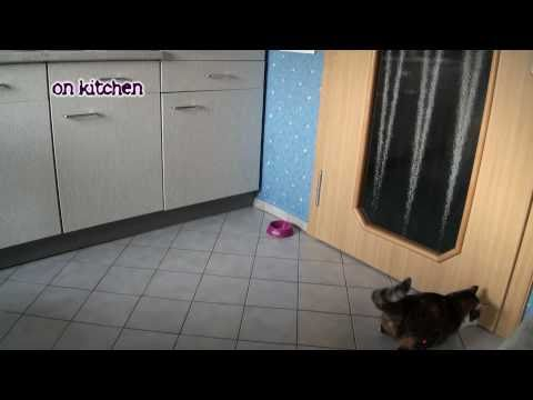 Crazy Stupid Cat vs. Laser Pointer