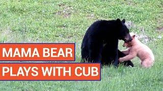 Sweet Mama Bear and Baby Cub Bonding   Daily Heart Beat