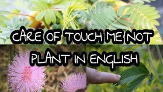 149# How to care for touch me not plant?