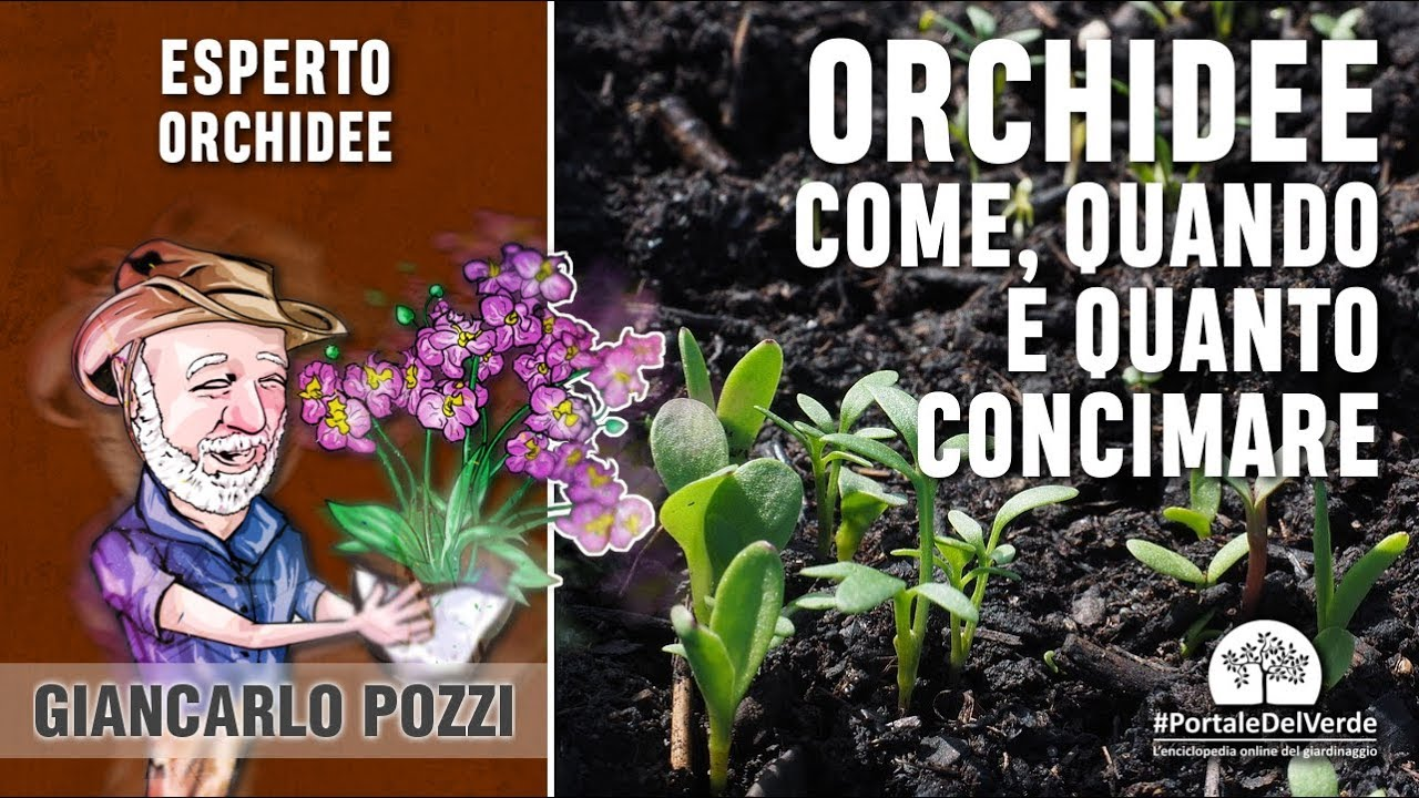 Come rinvasare le orchidee - Idee Green