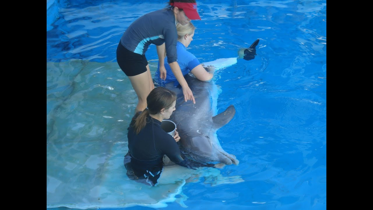 Winter the Dolphin at Clearwater Marine Aquarium, Florida ...