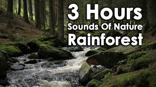 3 Hours Sounds Of Nature - Birds, Water, Wind, Forest