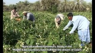 Success in the desert by a Bangladeshi (KUWAIT EPS 1)
