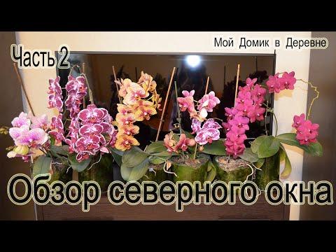 Обзор орхидей с северного окна! Часть 2 ! (05.19)