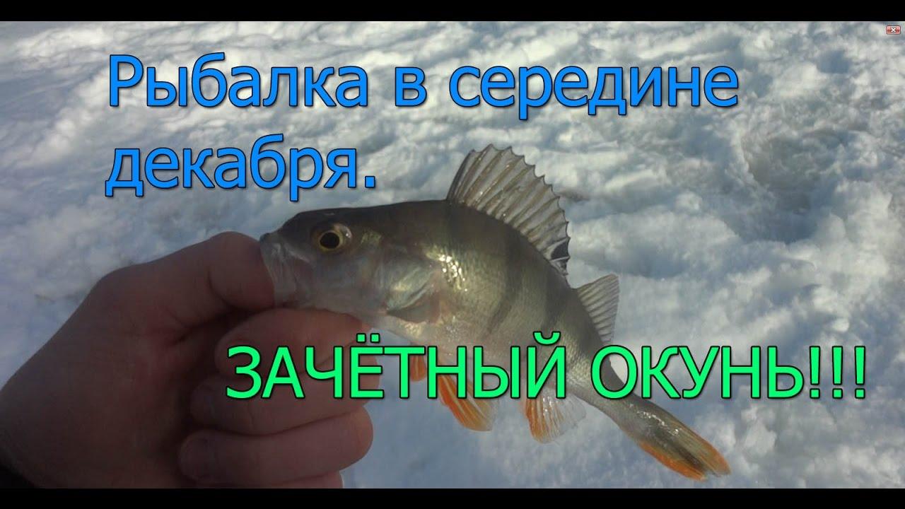клев рыбы на оке в марте