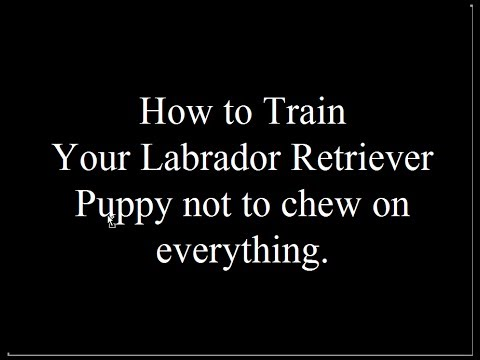 teaching-your-lab-puppy-not-to-chew---free-mini-course---biting-visitors--aggressive-behavior