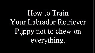 Teaching Your Lab Puppy Not To Chew - Free Mini Course - Biting Visitors- Aggressive Behavior