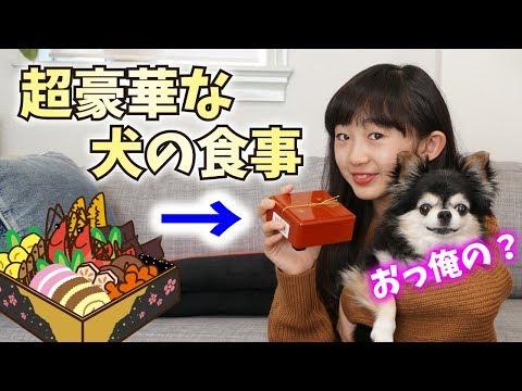 【豪華な食卓】豆太郎と大豆に季節外れの豪華おせち料理を振る舞う!犬とハムスター【ももかチャンネル】