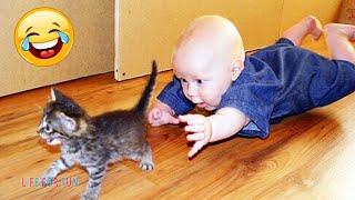 Смешные видео о детях и животных ● приколы с котами и собаками / Funny Baby Playing With Cats