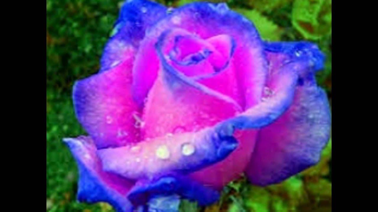 Las flores y rosas mas bonitas youtube - Fotos de flores bonitas ...