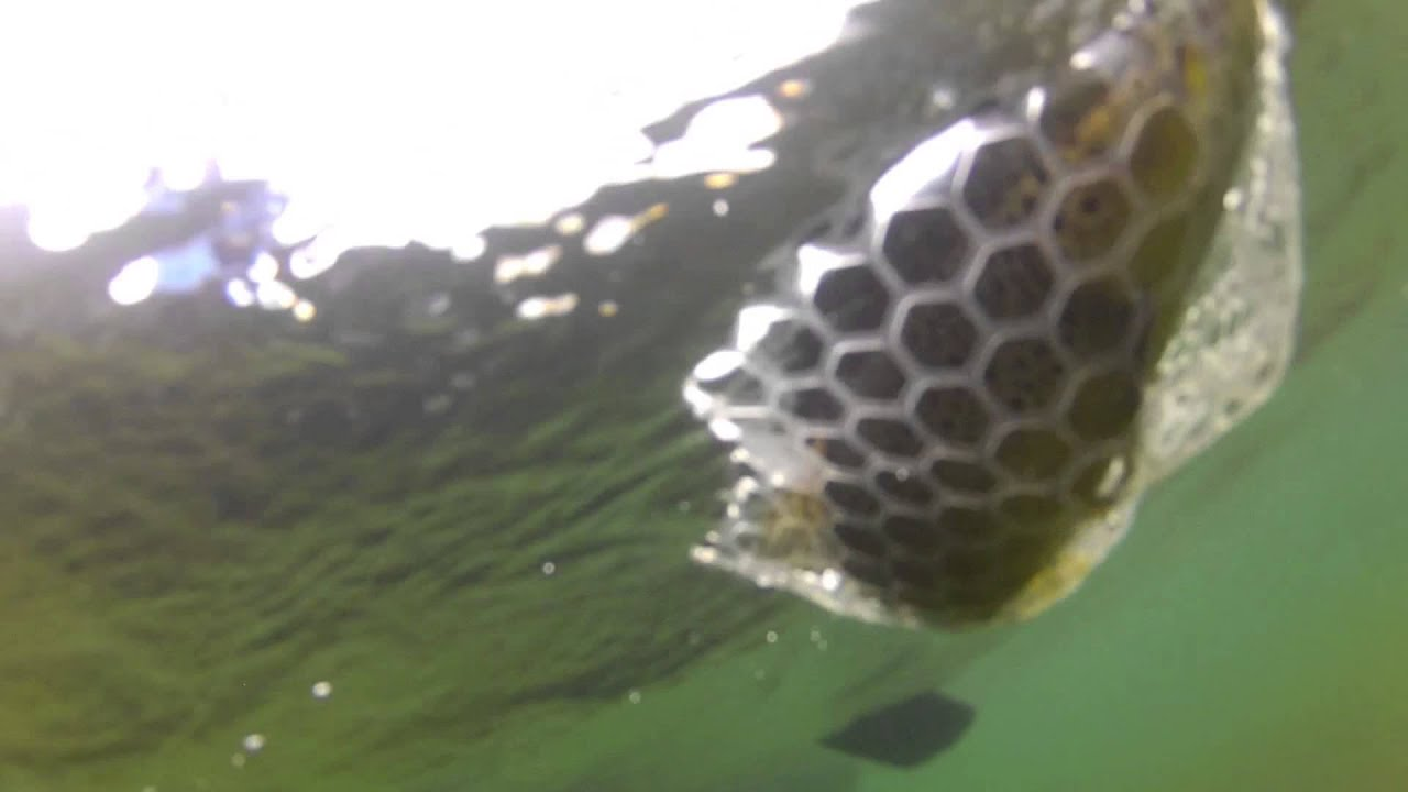 Videos - Dally's Ozark Fly Fisher