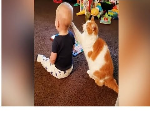 ❤Cute baby and cat❤ Cats playing fun together with a baby❤ Cat not getting angry at anything