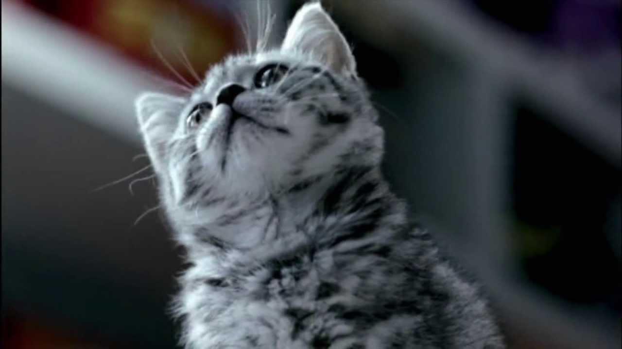 Cat Food Ratings >> Cute Whiskas kitten commercial [Finnish] - YouTube
