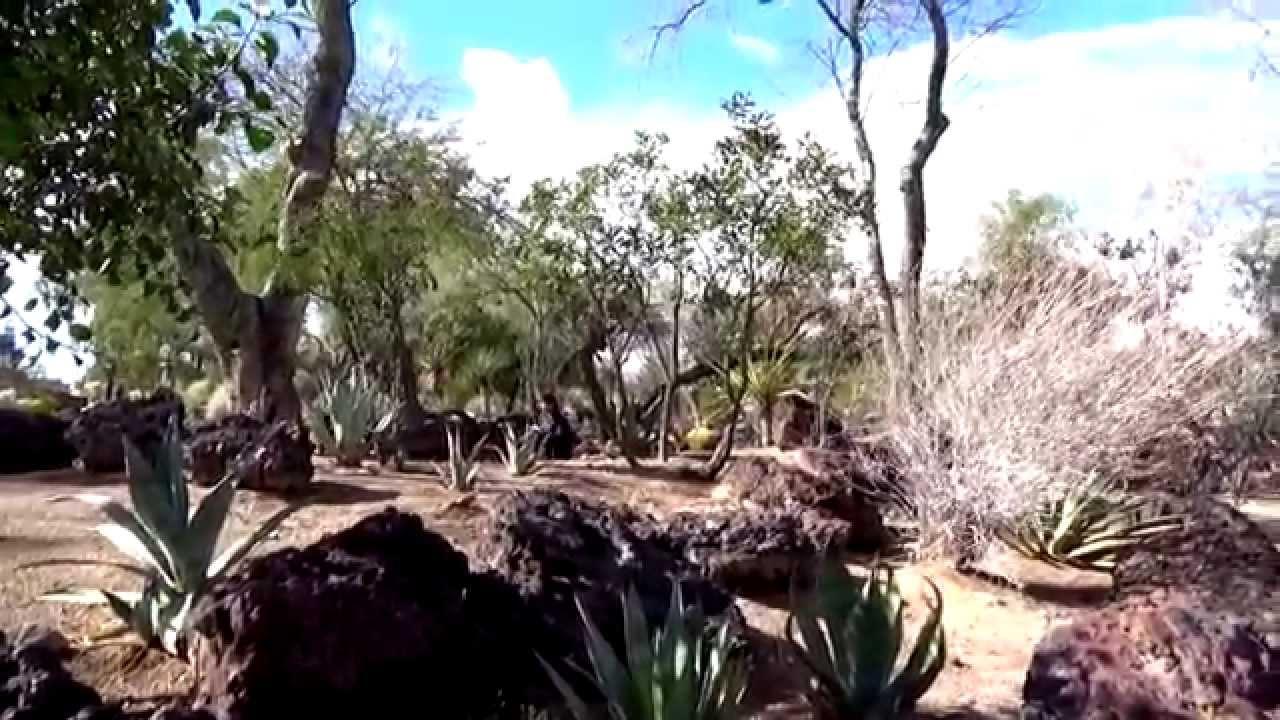 Ethel M Botanical Cactus Garden In Henderson, Nevada