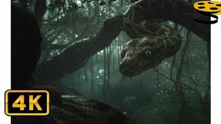 История Маугли. Встреча с Каа | Книга джунглей (2016) HD