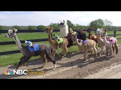 Kentucky Derby 2019: Alpacas predict winner in 2nd annual