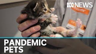 Coronavirus prompts increase in animal adoptions   ABC News