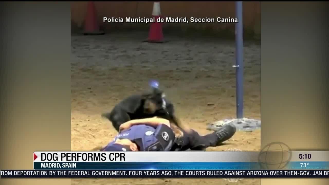 Contemporáneo Certificación De CPR Phoenix AZ Friso - Cómo conseguir ...