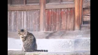出会った猫さん達の写真です。