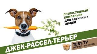 """TEST.TV: Джек-рассел-терьер  собака из фильма """"Маска""""."""