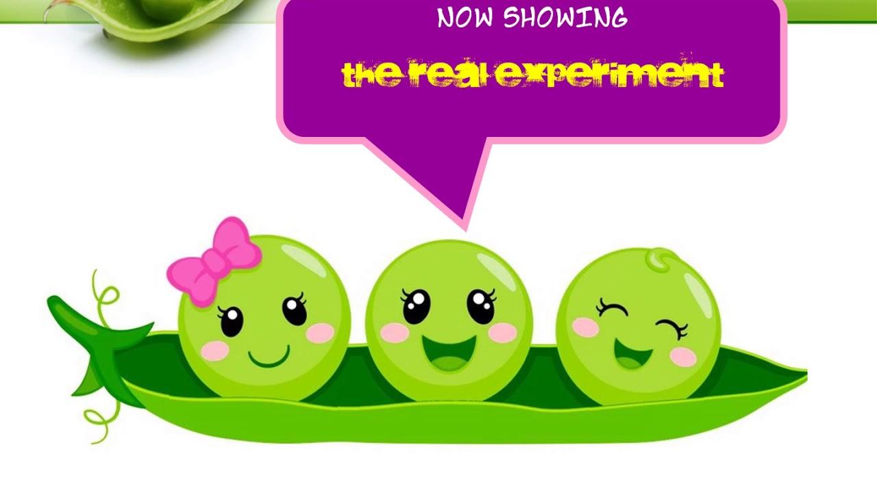 gregor mendel garden pea experiment