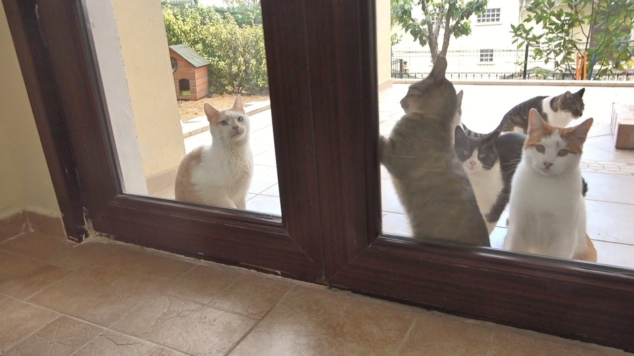 Outdoor Cats Stepping Inside A House For The First Time !!