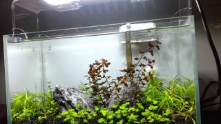 sanrise led aquarium lighting aqua lover p30 used on 30cm size tank