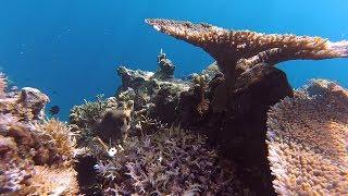 Niezwykly Swiat - Filipiny - Palawan - Rafa koralowa