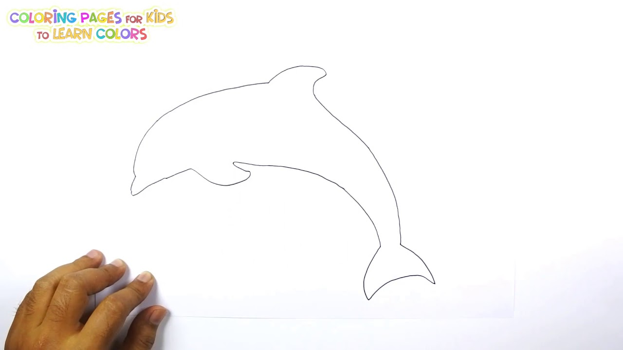 How To Draw A Cartoon Dolphin Coloring Pages For Kids Youtube