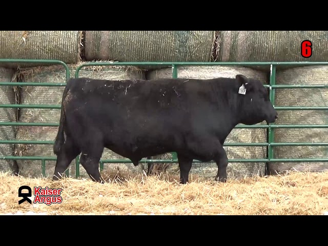 Kaiser Angus Ranch Lot 6