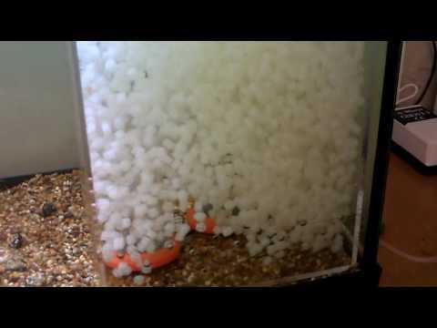 My diy aquarium filter bio filter funnydog tv for Homemade bio filter
