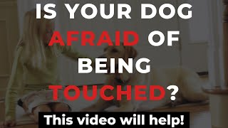 Dog Training Tip - How To Stop Fearful Dog Behavior | DogWorx Dog Training Savannah Ga