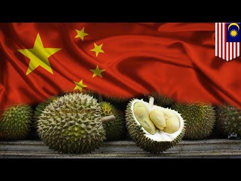 Malaysia Cashing In On Durian Craze In China - TomoNews