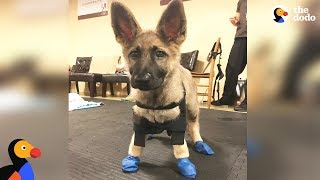 Puppy With Swimmer Syndrome Teaches Herself To Run - STARFISH | The Dodo