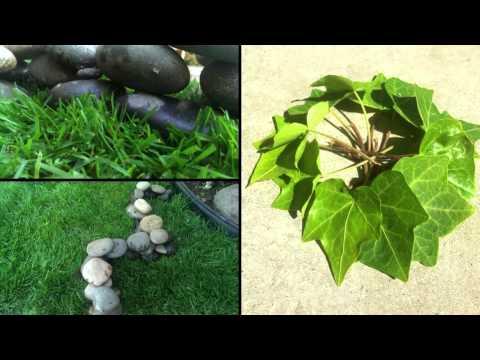 Organic Assemblage Spring 14 VisThink