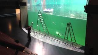 Nordsøen Oceanarium, Info om revne i rude.mov
