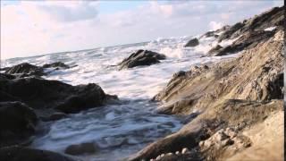 FRANK ZAPPA -- CANARD DU JOUR