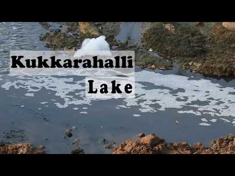 Effects of Untreated Sewage water input to Kukkarahalli lake Mysore