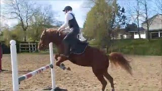 Cours d'obstacle Galop 5 - Etrier Cherbourgeois