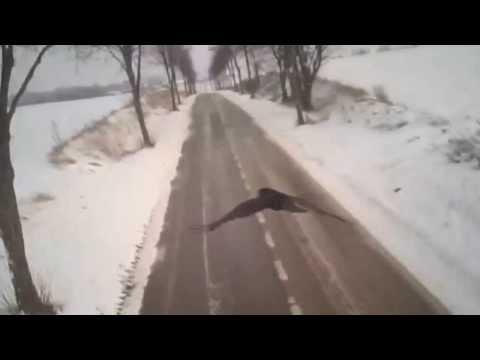 GoPro camera on falcon's back: Mid-flight bird attack caught on camera