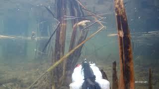 подводная охота на щуку в камышах