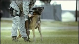 Обучение инструкторов кинологов в ВВС США Military Working Dog Handler Air Force