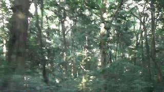 Летать в тропическом лесу. Fly in the rainforest - Lovers, Entwined