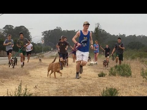 Pet Central - This Cross-Country Team Takes Lonely Shelter Dogs On Their Morning Runs