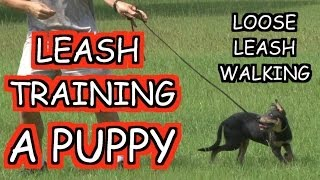 Leash Training A Puppy - Tutorial